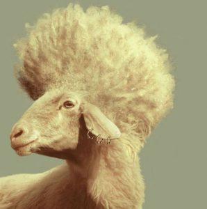 mouton-punk